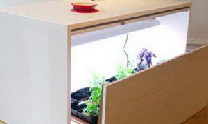 Кухонный стол – огород