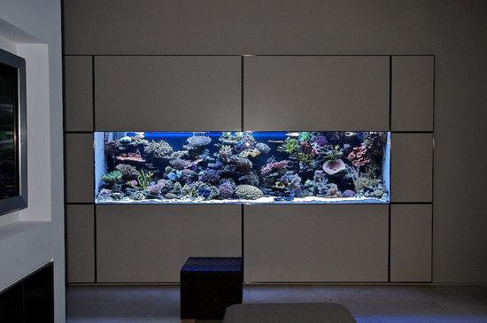 akvarium-v-stene-03