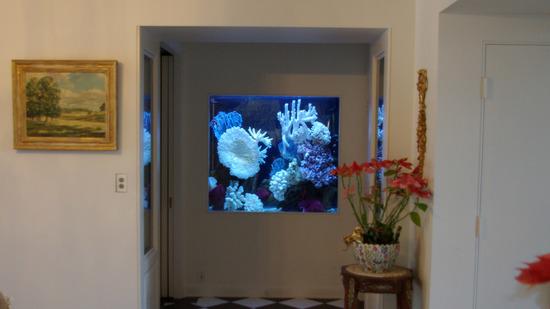 akvarium-v-stene-05
