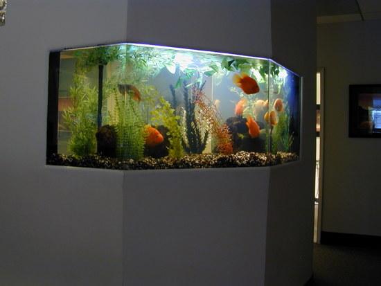 akvarium-v-stene-06