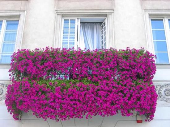 oformlenie-balkona-cvetami-09