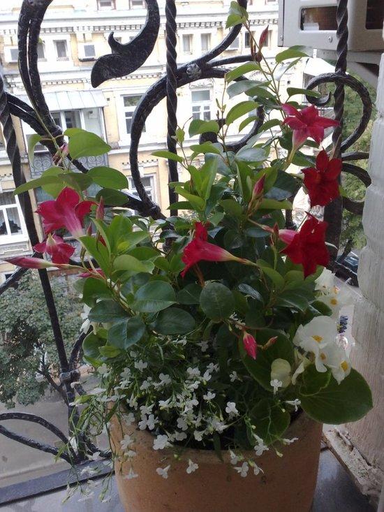 oformlenie-balkona-cvetami-10