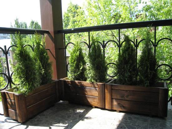 oformlenie-balkona-cvetami-11
