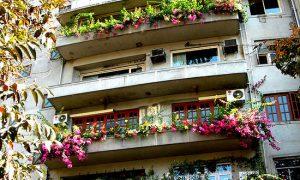 Какие растения подойдут для балкона