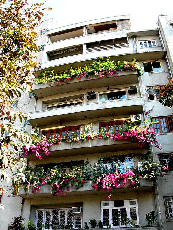 rasteniya-dlya-balkona-01