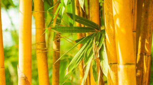 bambukovie-oboi_12