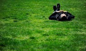 Газон Лилипут для ленивых: облагораживаем дачу