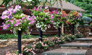 Красивые дорожки в саду: фото идеи