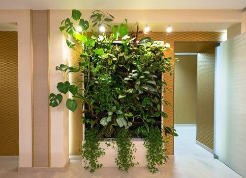 Вертикальное озеленение квартире сам своими руками 34