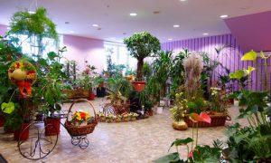 Идеи оформления интерьера цветочного магазина