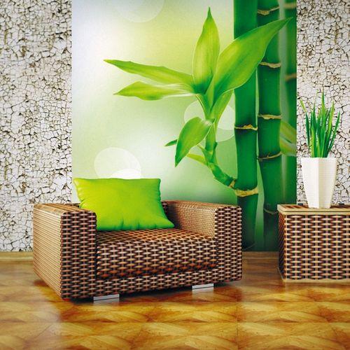 Бамбук в современном интерьере