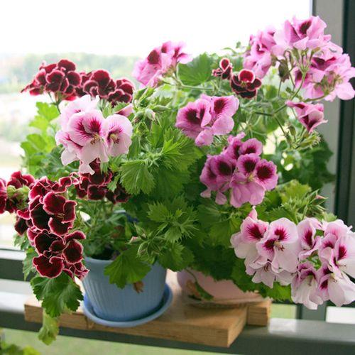 komnatnye-cvety-v-spalne_2