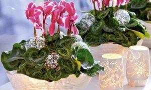 Цветущие комнатные растения для оформления интерьера