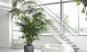 Пальмы в интерьере дома и офиса