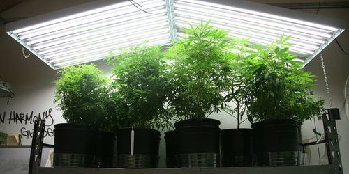 Подсветка растений
