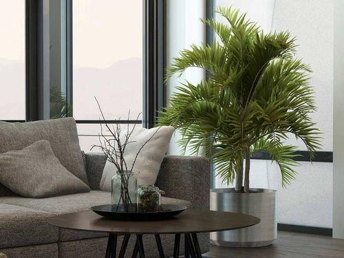 Декоративное дерево в гостиной