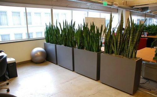 Зонирование пространства растениями